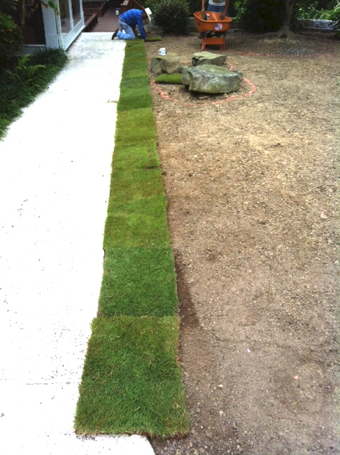The best start for the sod job is a straight line. The pieces should be placed as tightly together as you can get them.