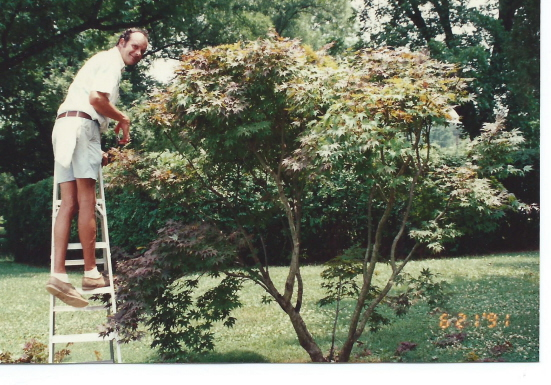 John the plant man pruning the palmatum tree in 1991