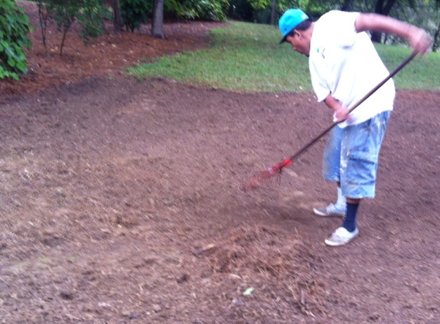 Use a leaf rake to remove debris and to level the ground