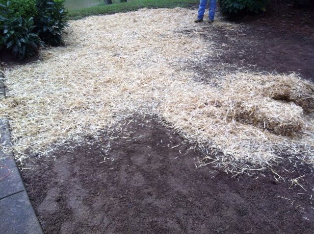 Apply wheat straw to the seeded area.
