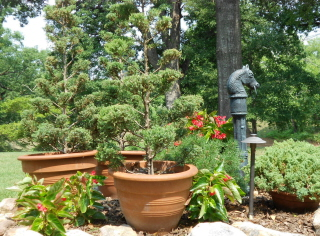 Topiaries in containers are wonderful accents for entry ways.