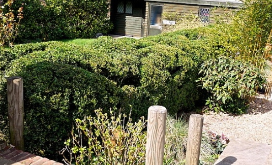 cloud pruning boxwoods Johntheplantmans stories