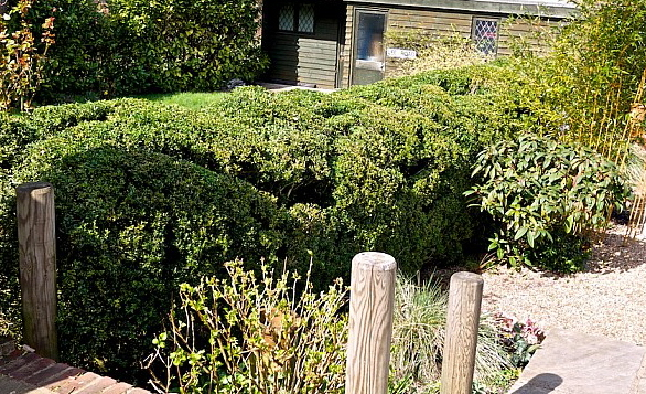 Jake Hobson. Picture of after cloud pruning over grown boxwood