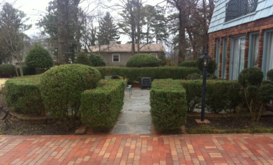 A well-tended boxwood bordered courtyard. Picture taken after pruning on February 7