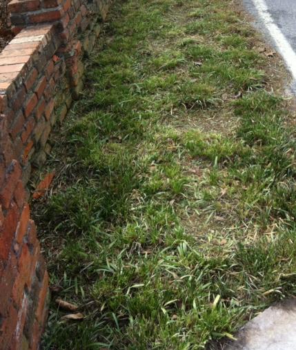 Liriope (aka 'monkey grass') cut back in February