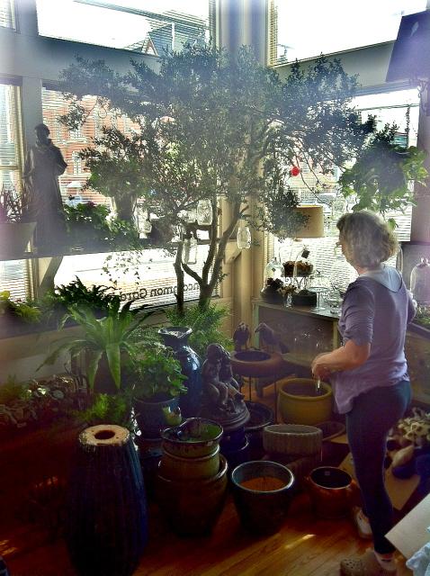 building a shop display under a tree
