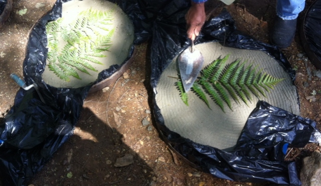 Impression of autumn fern imbedded in a stepping stone using a whiskey barrel ring for a form