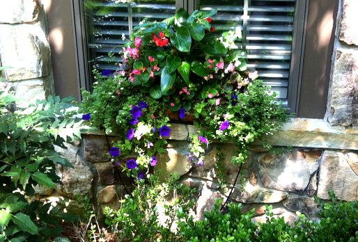 Window box with begonias and petunias planted in coconut fiber basket and grown in for one month