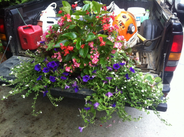 Window planter before trimmimg