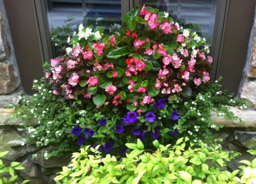 A beautiful window box but to stay beautiful it needs to be trimmed