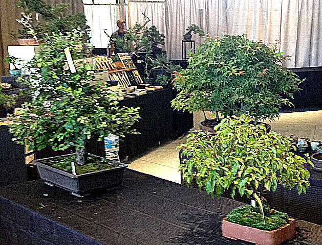 A wonderful bonsai show was being set up just for us at Cheekwood