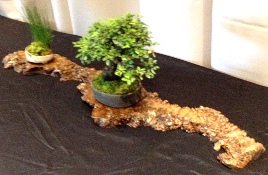 bonsai arrangement on polished driftwood