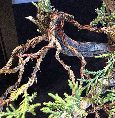 bonsai tree limbs wrapped with specially treated copper wire