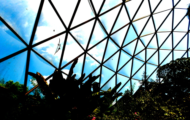 From inside the greenhouse, Des Moines Botanical Garden