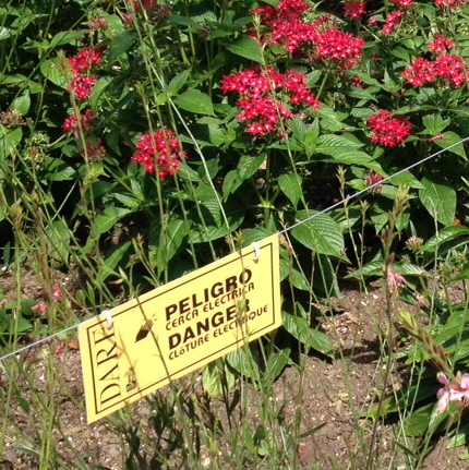A 12 volt electric fence in the garden reduces damage from deer and/or dogs