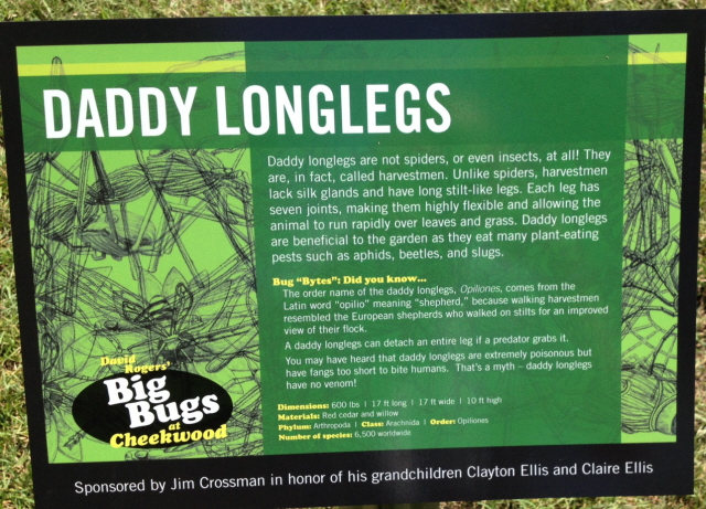 Is a daddy longlegs really a spider?