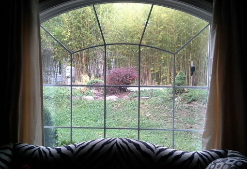 """The """"before"""" picture. What can we do to turn the view into a pretty garden picture?"""