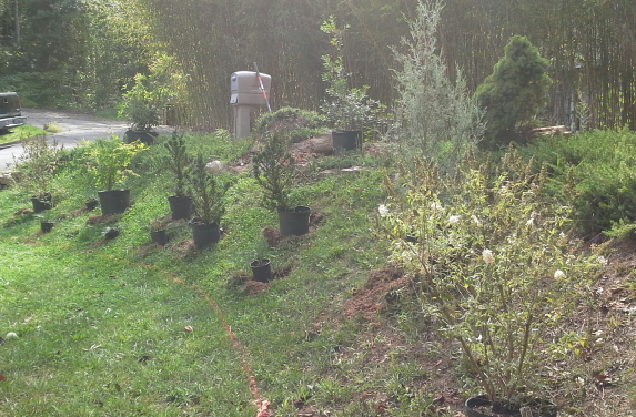 Plants set in place and ready for planting