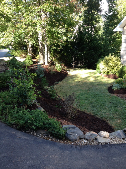 hillside planted and mulched with cypress