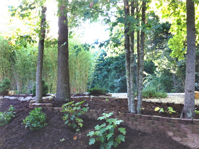 The wooded area has been cleaned up and mulched