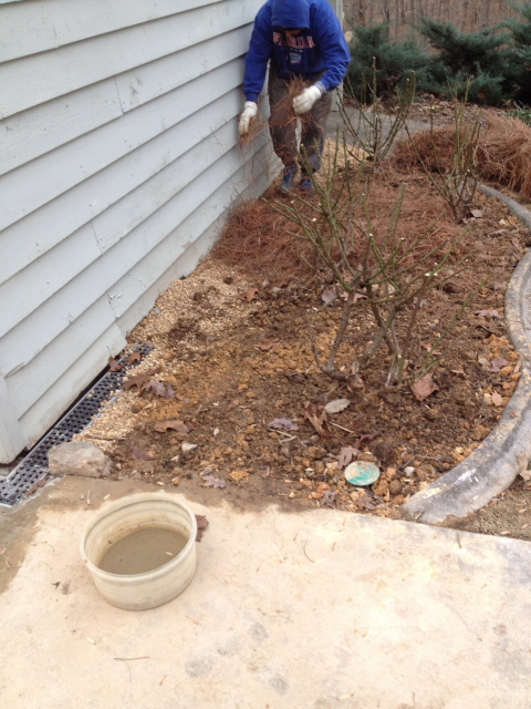 smoothing, planting, and mulching the improved shrub bed.