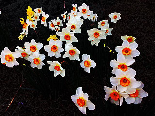 spring cluster