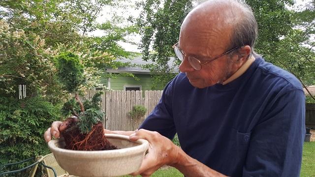 blog dwarf bonsai 2