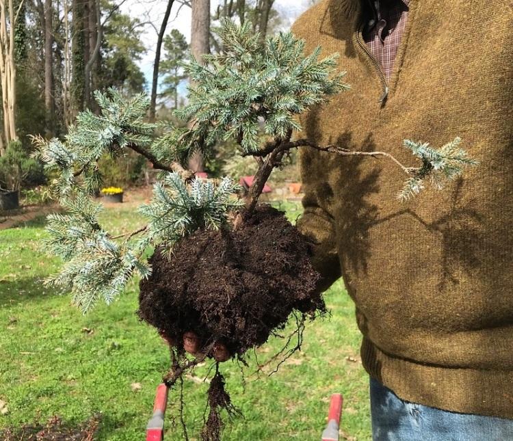 blog saikei planting 3