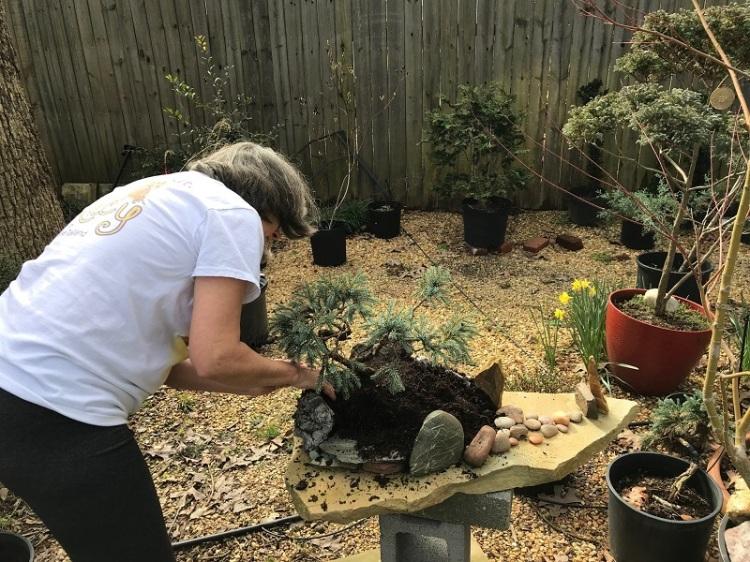 blog saikei planting 4