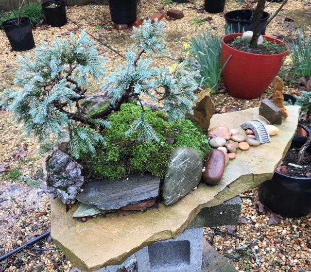 blog saikei planting 5