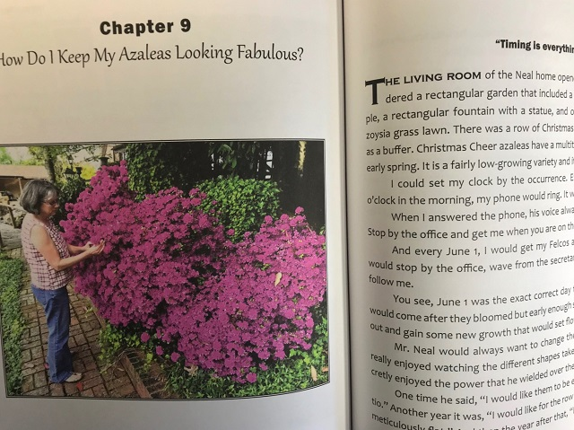 To get beautiful, compact azaleas, they must be trimmed at just the right time of year. Find out when