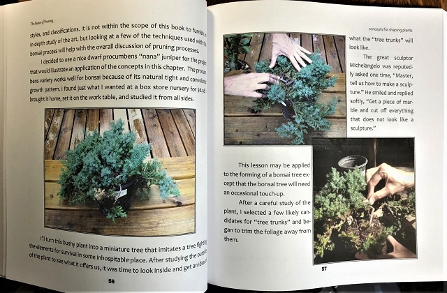 Follow directions in Chapter 6 of The Basics of Pruning to turn an inexpensive plant into a beautiful bonsai